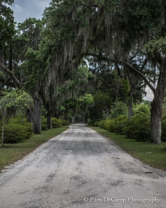 Entry into Bonaventure Cemetery