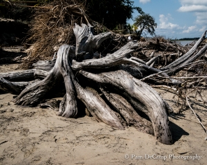 Drift wood roots on Bradley Beach