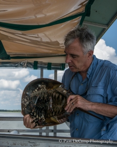 Captain Mike Neal explains the benefits of the horseshoe crab.