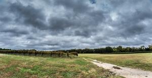 Williamsburg Winery Vineyard
