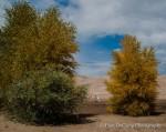 Great Sand Dunes NationalPark