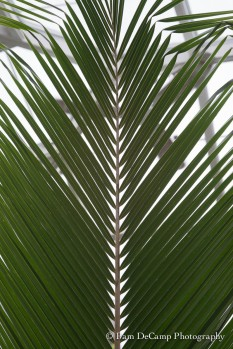 Palm leaf before