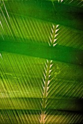 Palm leaf: Intersecting Lines